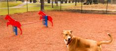 Dog at Navaho Terrace Dog Park