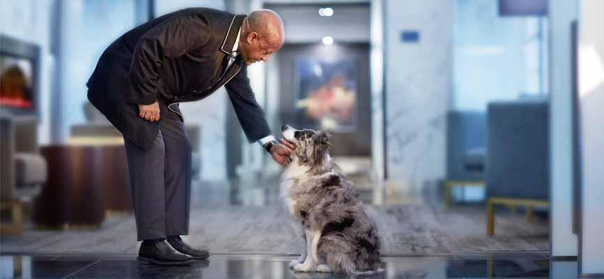 concierge bending down to pet a cute dog