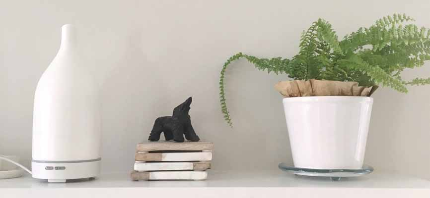 diffuser and plant on a shelf