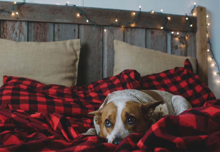 flannel sheets on bed with dog and sparkly lights