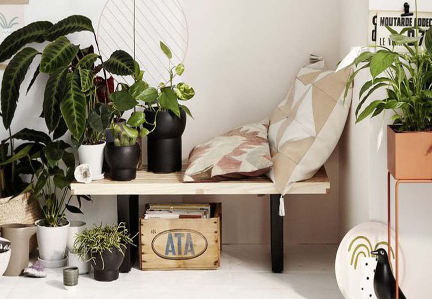 House plants near a wooden bench