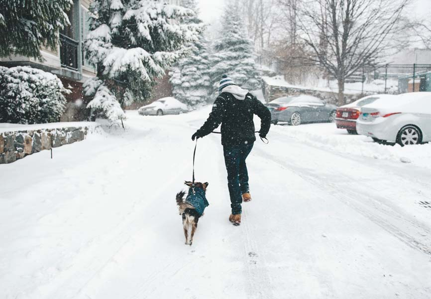 Dog running with owner in the snow