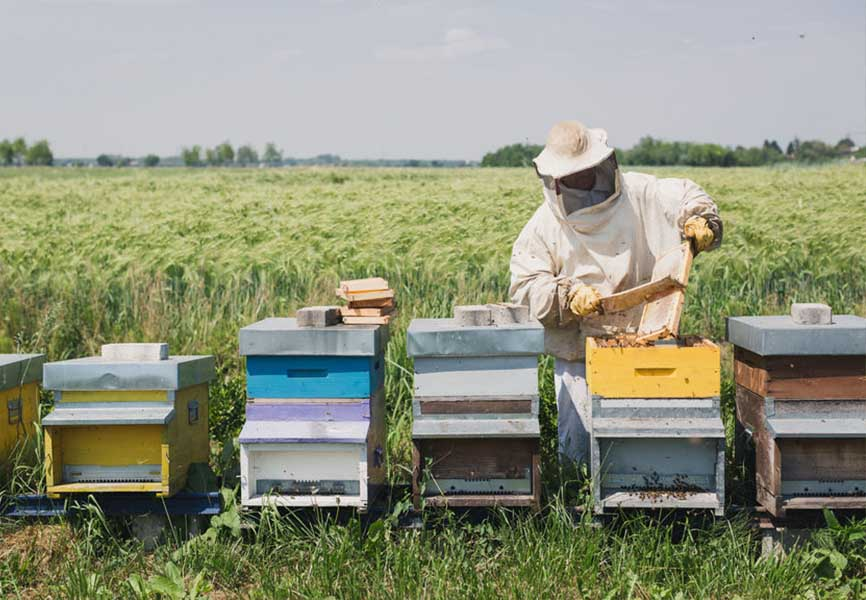 Beekeeper tending to his bees