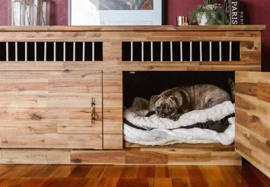 Small dog on a bed in a cabinet