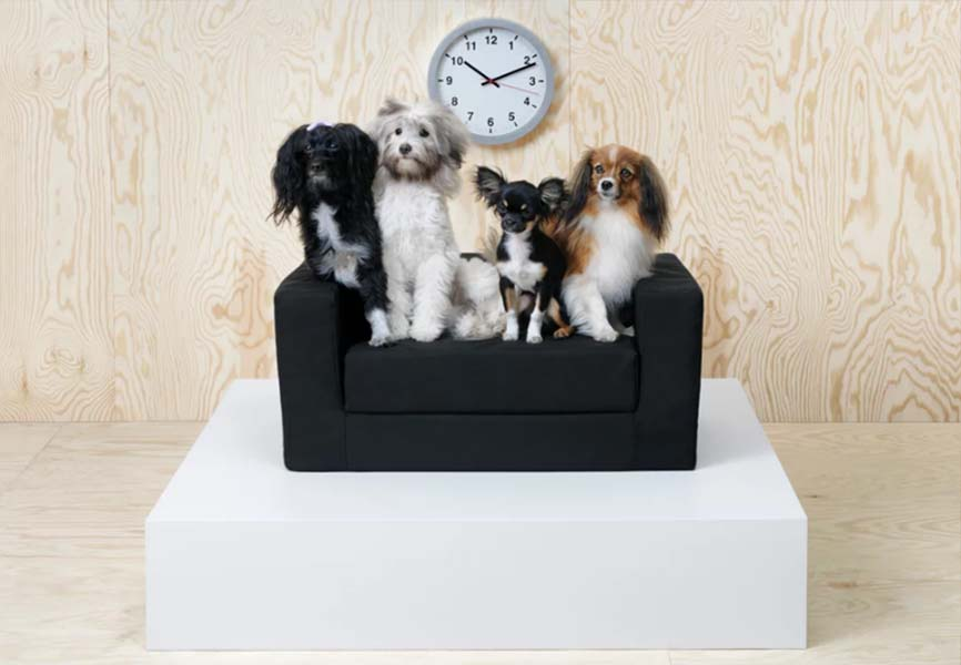 Small dogs on a dog bed in front of a clock