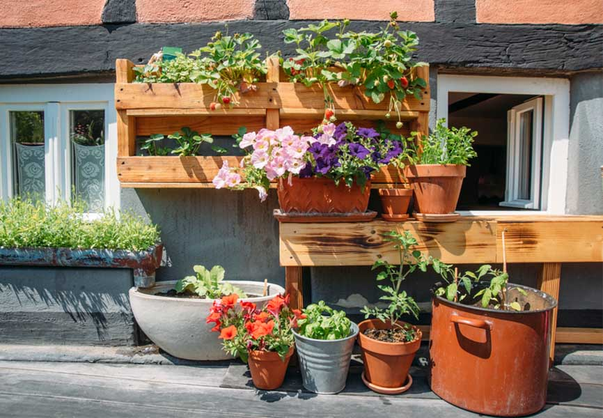 potted flowers outside on wooden ledge
