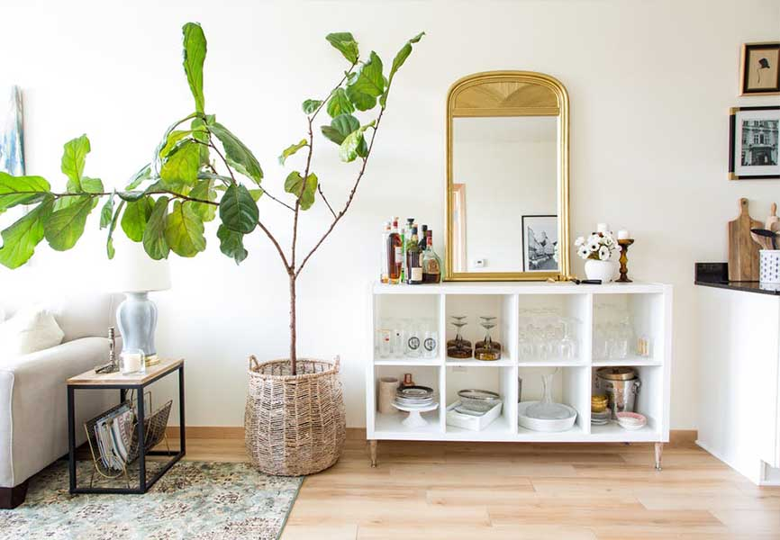 Small tree in a living room