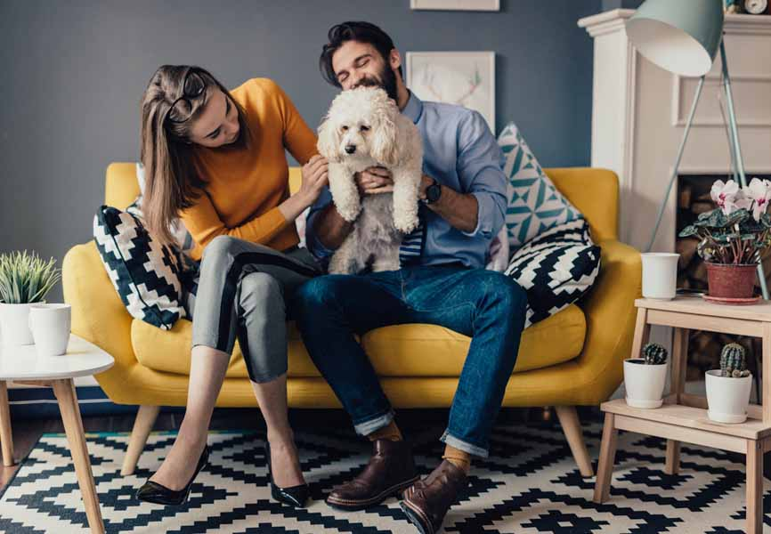 small apartment yellow couch with couple and dog sitting down