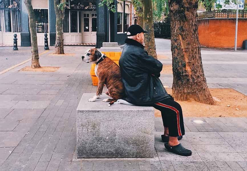 older man sitting on cement block in park with dog