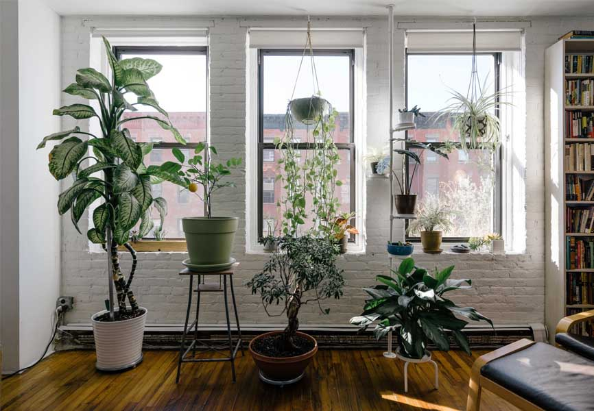 living room in house with house plants all over the room