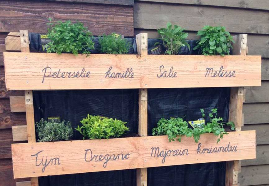outdoor herb garden