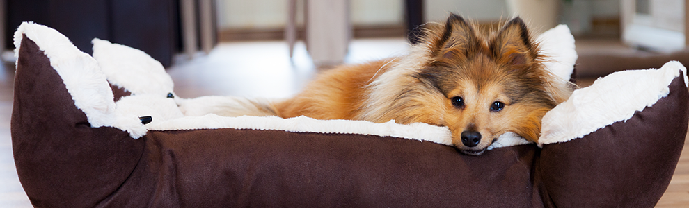 sheltie laying on top of a brown and white dog bed