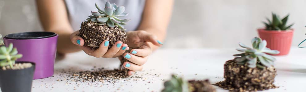 Hands holding a succulent