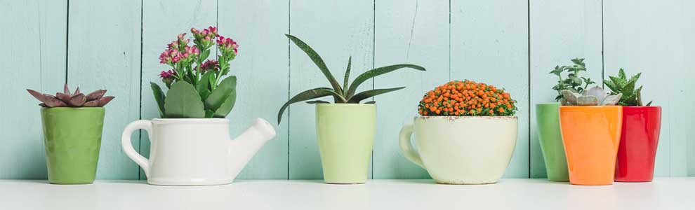 potted plants lined up with mint background