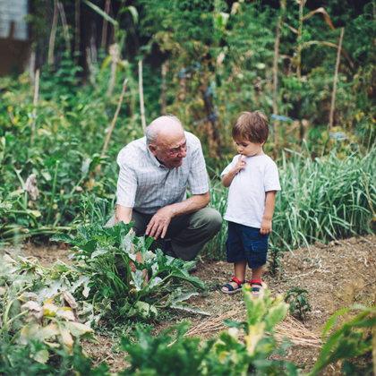 little boy with grandpa in garden looking at plants