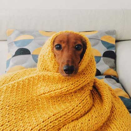cute dog wrapped in a yellow blanket