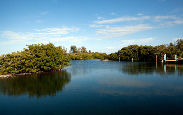 Mangrove preserve keeps the Florida nature at your doorstep